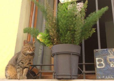gatto-bbIMG_0021